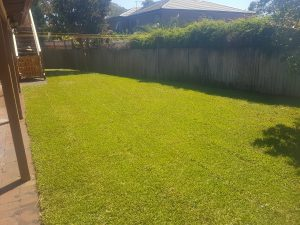 lawn mowing northern beaches