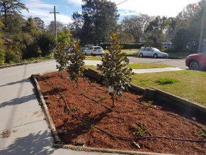 Gardener Sydney