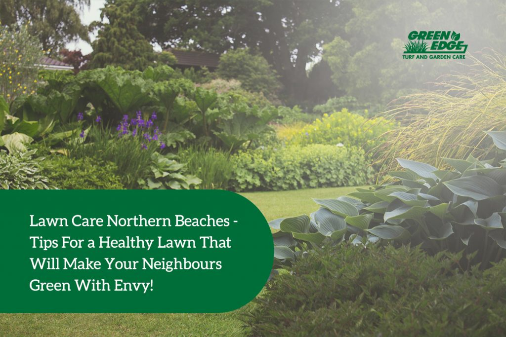 lawn care northern beaches