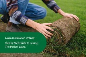 lawn Installation sydney
