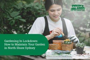garden maintenance north shore sydney
